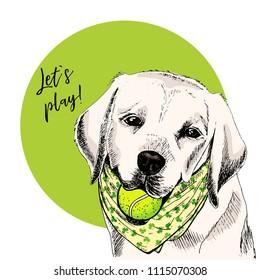 Vector portrait of Labrador retriever dog with tennis ball. Let s play. Green curveball. Summer cartoon illustration. Hand drawn pet portait. Poster, t-shirt print, holiday, postcard, summertime.