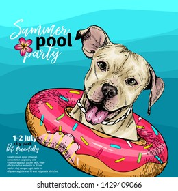 Vector portrait of pit bull terrier dog swimming in water. Donut float. Summer pool paty illustration. Sea, ocean, beach. Hand drawn pet portait. Poster, t-shirt print, holiday, postcard, summertime