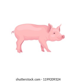Vector portrait of standing pig, side view. Domestic animal with pink skin, swirling tail, flat snout and hooves