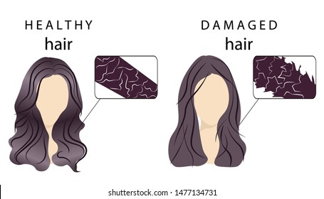 Vector poster demonstrating the difference between healthy normal hair and demaged hair. Close-up construction, building, structure and texture of hair to compare. Shining hair and thin dull brittle