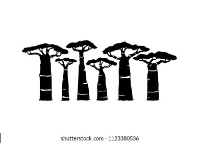 Vector  poster with hand drawn baobab trees. Beautiful design elements, ink drawing, logo template