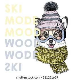 6e919a7d6d0 Vector poster portrait of welsh corgi dog.Ski mode mood.Puppy wearing beanie