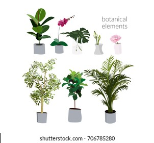 vector pot plants illustration. philodendron, palm tree, orchid, flower in vase. interior design elements. home decor decoration. house plants. collection.