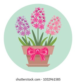Vector potted hyacinth flowers with pink bow. Icon. Greeting card template. Spring flowers in flat style.