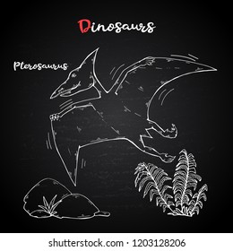 Vector Pterosaur with plant and stone on chalk blackboard.Jurassic Wildlife.Wild animals dinosaurus.Animal character.Wild creatures of the Jurassic period.White dinosaurus Silhouette