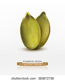 Vector pumpkin seeds (peeled) isolated on white background