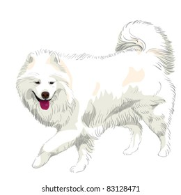 vector purebred fluffy white Samoyed dog runs and smiles