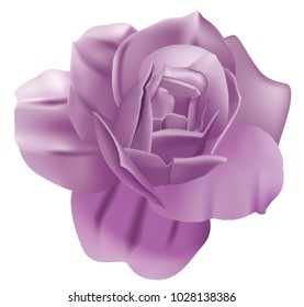 Vector purple rose
