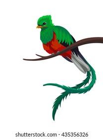 Vector quetzal