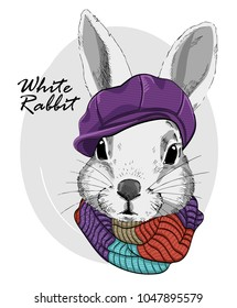 Vector rabbit with violet cap and knitted scarf. Hand drawn illustration of dressed rabbit.