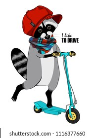 Vector raccoon with a green kick scooter. Hand drawn illustration of dressed coon  with red cap and scarf.