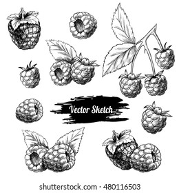 Vector raspberries hand drawn sketch. Sketch vector  food illustration. Vintage style