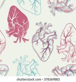 Realistic Heart Human Images, Stock Photos & Vectors