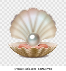 Vector realistic beautiful 3D opened shell with shining pearl inside isolated on white transparent background.
