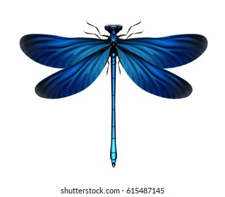 Vector realistic blue Calopteryx virgo dragonfly close up top view isolated on white background