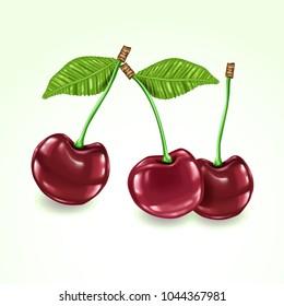 Vector realistic cherries