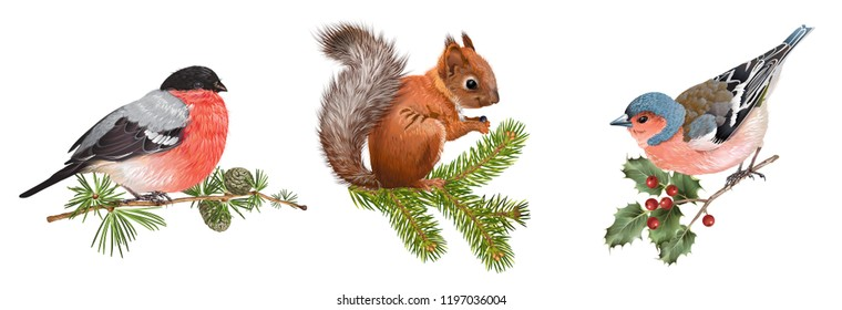 Vector realistic detailed set with bullfinch, bird and squirrel on branches isolated on white background. Winter design elements for Christmas, New year,holidays. Best for greeting card, poster