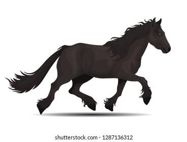 vector realistic friesian horse