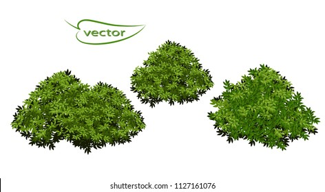Vector realistic illustration in 3D Bushes of leaves, green lush shrubs, plants detail of nature.