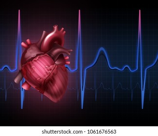 Vector realistic illustration of anatomy human heart beat rate line with cardiogram pulse heartbeat. Isolated on background