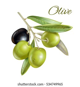 Vector realistic illustration of black and green olives branch isolated on white background. Design for olive oil, natural cosmetics, health care products.