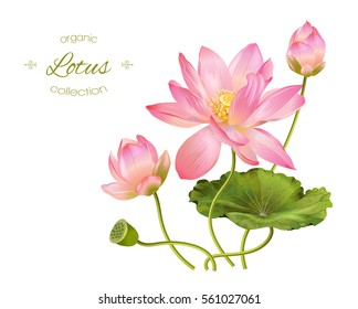Flowers of lotus images stock photos vectors shutterstock vector realistic illustration of lotus flowers and leaves isolated on white background design for mightylinksfo