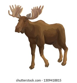 Vector realistic illustration moose isolated on white realistic style forest animal wild moose deer mammal herbivorous animal european animal wild animal moose brown horns