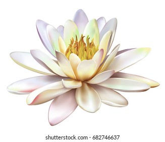 Vector realistic illustration of pastel yellow pink lotus flower isolated on white background. Design for natural cosmetics, health care and Ayurveda products, yoga center.