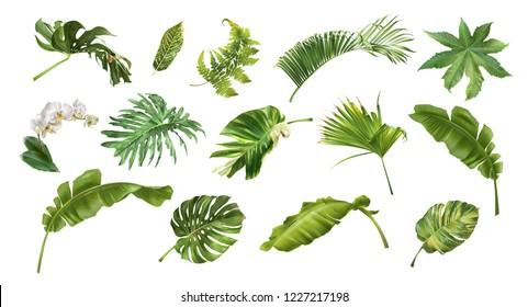 Векторный реалистичный иллюстрационный набор тропических листьев и цветов, изолированных на белом фоне. Высоко детализированная красочная коллекция растений. Ботанические элементы для косметики, спа, косметики