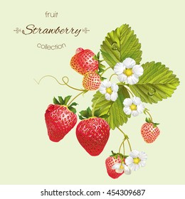 Vector realistic illustration of strawberry with leaves and flowers. Isolated on light green background. Design for grocery, farmers market, tea, natural cosmetics, aromatherapy,summer design element.