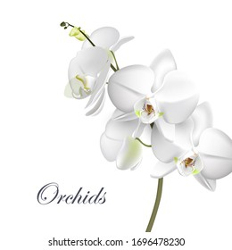 Vector realistic illustration of white Orchid flowers on isolated on white background. Floral tropical design element for the cosmetics, perfumes, and cosmetics.