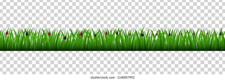 Vector realistic isolated grass border with mite insects for decoration and covering on the transparent background. Concept of meadow, field and danger of nature.