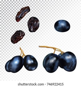 Vector realistic isolated illustration of grape and raisins. Sweet dryed fruits and organic dessert for health. Agricultural organic grapes on a transparent background.