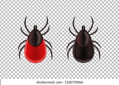 Vector realistic isolated ixodes tick insects for decoration and covering on the transparent background. Concept of mite danger, disease danger and encephalitis precaution.