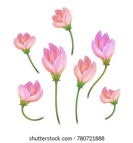 Vector realistic lotos, cherry, sakura peony, apple tree flower closed with stem set. Pink detailed floral, natural spring, valentine, women day lightness symbol Isolated illustration white background