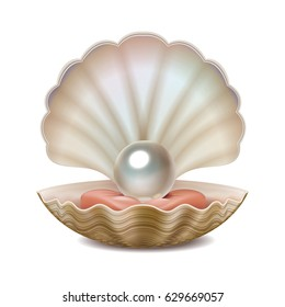 Vector realistic opened shell with shining pearl inside isolated on white background.