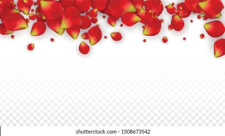 Vector Realistic Red Rose Petals Falling on Transparent Background.  Romantic Flowers Illustration. Flying Petals. Sakura Spa Design. Blossom Rose Confetti. Design Elements for  Wedding Decoration.