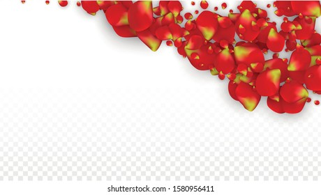 Vector Realistic Red Rose Petals Falling on Transparent Background.  Romantic Flowers Illustration. Flying Petals. Sakura Spa Design. Blossom Rose Confetti. Design Elements for  Web Design.