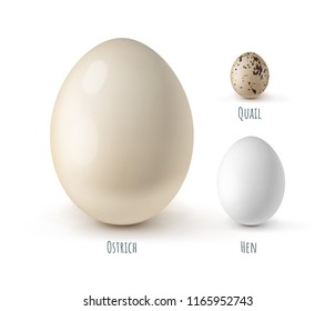 Vector realistic set of different eggs of ostrich, chicken hens, quails isolated on white background