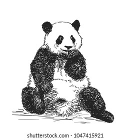 Vector realistic sketch of cute sitting Panda in full-length, Hand drawn illustration