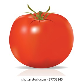 Vector, realistic tomato isolated on white background, contains gradient mesh elements
