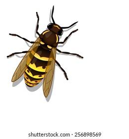 vector realistic wasp