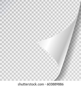 Vector realistic white paper page curl on the transparent background.