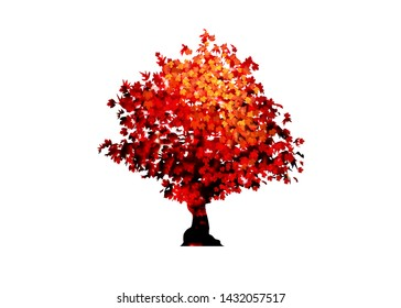 Acer Palmatum Deshojo Images Stock Photos Vectors Shutterstock
