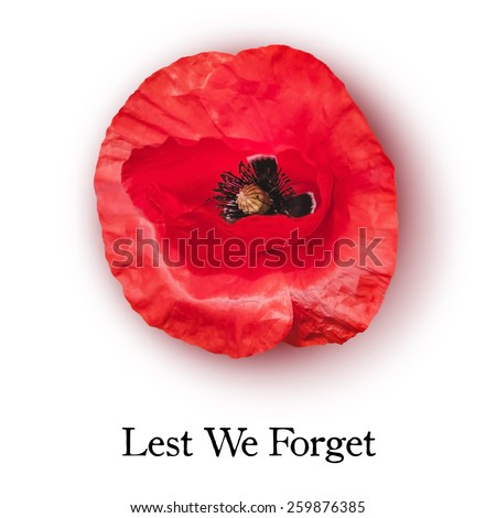 Vector red poppy flower anzac day stock vector royalty free vector red poppy flower for anzac day or remembrance armistice day lest we forget mightylinksfo