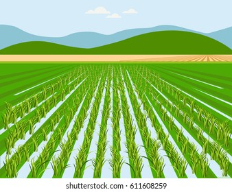 Vector rice field and mountain background