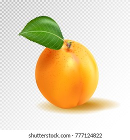 Vector ripe orange apricot on transparent background. Object from realistic 3D vector fruit collection
