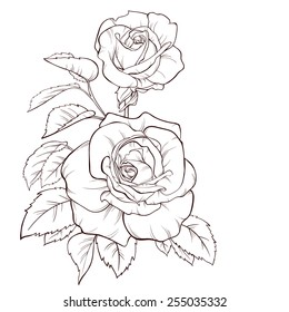 Vector rose flower isolated on white background. Element for design. Hand-drawn contour lines and strokes.