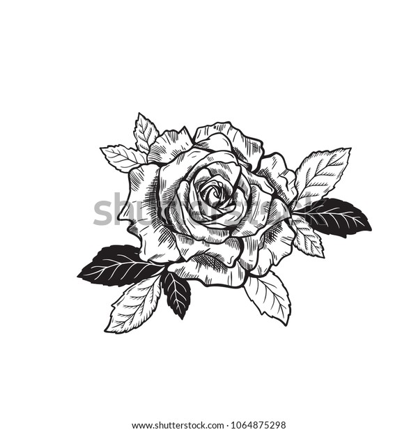 Vector Rose Flower Tattoo Sketch Drawing Stock Vector Royalty Free