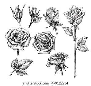 vector roses with leaves set on white background